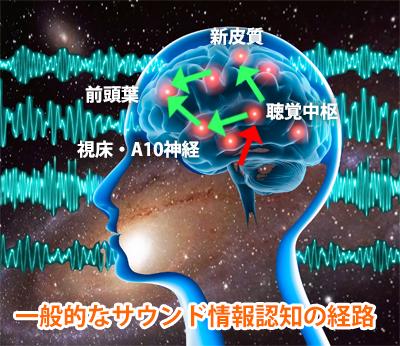通常の聴覚による認知はまず、まず赤い矢印の聴覚中枢に情報が送られ、新皮... VOICEグッズ